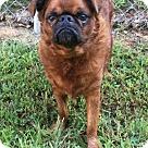Adopt A Pet :: Benny