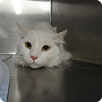 Adopt A Pet :: OLAF - Tucson, AZ