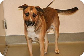 Shepherd (Unknown Type) Mix Dog for adoption in Wildomar, California - Mayhem