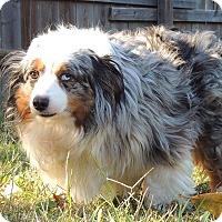 Adopt A Pet :: Petey - Joplin, MO