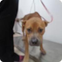 Adopt A Pet :: Spice - St Augustine, FL