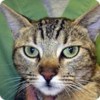 Adopt A Pet :: Scarlett - Wildomar, CA