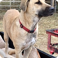 Adopt A Pet :: Harley - Houston, TX