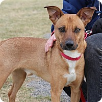 Adopt A Pet :: Bandit - Elyria, OH