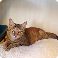 Adopt A Pet :: Kimber - Marina del Rey, CA