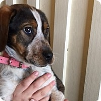 Adopt A Pet :: Payton - Polson, MT