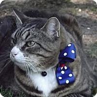 Adopt A Pet :: Lil' Man - Midway, GA
