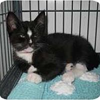 Adopt A Pet :: Riggo - Shelton, WA