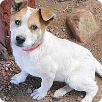 Adopt A Pet :: Sienna - dewey, AZ