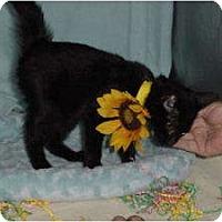 Adopt A Pet :: Chic - McDonough, GA