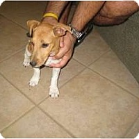 Adopt A Pet :: Frankie in Austin - Houston, TX
