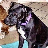 Adopt A Pet :: Bebe - Scottsdale, AZ