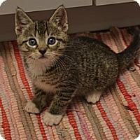 Adopt A Pet :: Luigi - Oyster Bay, NY