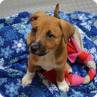 Adopt A Pet :: Sandy - Burleson, TX