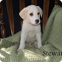 Adopt A Pet :: Stewart - Southington, CT