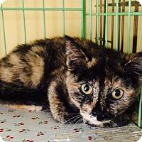 Adopt A Pet :: Delilah - Island Park, NY