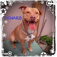 Adopt A Pet :: Denaro - Tinton Falls, NJ