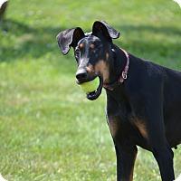 Adopt A Pet :: Jude - Lake Odessa, MI