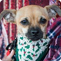 Adopt A Pet :: Louie - San Marcos, CA