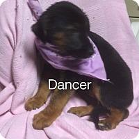 Adopt A Pet :: Dancer - Rochester, NY