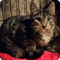 Adopt A Pet :: Norma - Hudson, WI