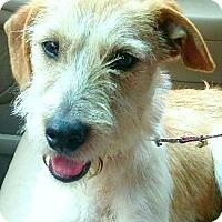 Adopt A Pet :: Tita - Boulder, CO
