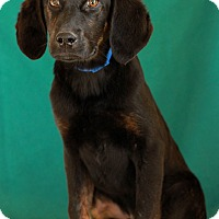 Adopt A Pet :: Fowler - Waldorf, MD