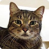 Adopt A Pet :: Moya - St. Louis, MO