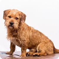 Adopt A Pet :: Yarmouth-just perfect - Woonsocket, RI