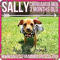Adopt A Pet :: Sally - Rancho Cucamonga, CA