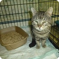Adopt A Pet :: Maury - Manchester, CT