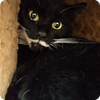 Adopt A Pet :: Oreo - Chula Vista, CA