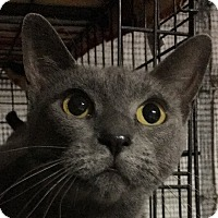 Adopt A Pet :: Tamar - Winchester, CA