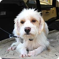 Adopt A Pet :: Manny - Los Angeles, CA