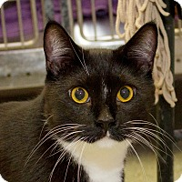 Adopt A Pet :: William - Schererville, IN