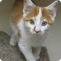 Adopt A Pet :: Tizzy - Gary, IN