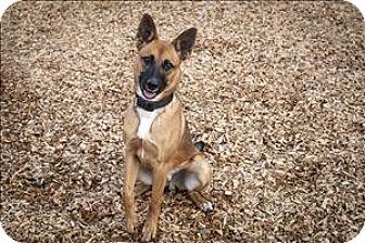 Shepherd (Unknown Type) Mix Dog for adoption in Napa, California - Troy