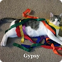 Domestic Shorthair Cat for adoption in Bentonville, Arkansas - Gypsy