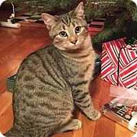 Adopt A Pet :: Dudley - Harrisonburg, VA