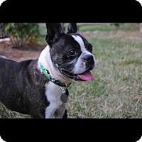 Adopt A Pet :: King - Coopersburg, PA