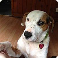Adopt A Pet :: Rocky - Lebanon, ME