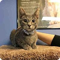 Adopt A Pet :: LEGEND - Canfield, OH