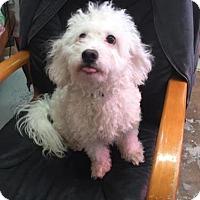 Adopt A Pet :: Petrie - Phoenix, AZ