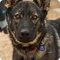 Adopt A Pet :: Felony - Phoenix, AZ