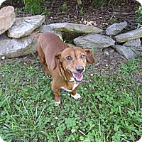 Adopt A Pet :: Brody - Lawndale, NC
