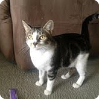 Adopt A Pet :: Monster - Modesto, CA