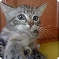 Adopt A Pet :: Maddie - Mobile, AL