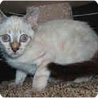 Adopt A Pet :: Eskimo - Dallas, TX