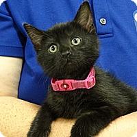 Adopt A Pet :: DAPHNE - Diamond Bar, CA