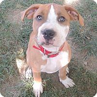 Adopt A Pet :: Brody - Trenton, NJ